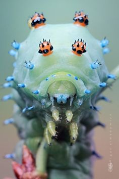 micro photography by igor siwanowicz 4 40 Lovely Examples of Macro Photography