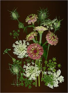 Zinnias and Amie - Brown Backgrounds - Scanner Photography By Ellen Hoverkamp