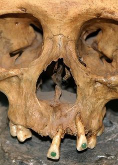 At the height of Mayan civilization, body modification included a variety of alterations of the teeth. Holes in the teeth were created by spinning a drill with a bow . Ancient Aliens, Ancient History, Ancient Egypt, Collections D'objets, Crane, Maya Civilization, Inka, Mesoamerican, Mystery Of History