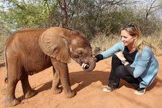 too cute - baby elephant Amphibians, Mammals, Wild Animals Photos, Cute Baby Elephant, Baby Makes, African Elephant, Animals Of The World, Four Legged, Wonders Of The World