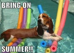 I wish Rebel would relax like this in the pool!!