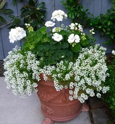 Container Flowers, Container Plants, Container Gardening, Vegetable Gardening, Succulent Containers, Small Backyard Gardens, Modern Backyard, Large Backyard, Moon Garden