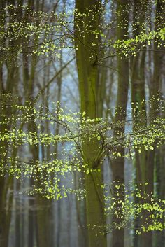 Spring green by Jose Gieskes / 500px