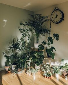 House Plant Care Tips. This was our house plant collection a year ago if you'd like to know how we manage to look after them visit the link in our profile @haarkon_