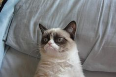 "grumpy cat says ""Roses are red.  Violets are blue.  I hate you."""