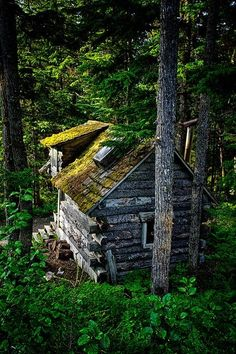 Ancient Forest Cabin, Girdwood, Alaska , via pinterest