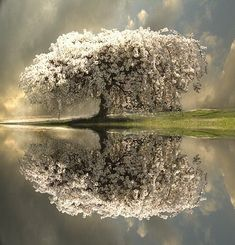 Would love this outside of my window / tree reflection / nature photography All Nature, Amazing Nature, Nature Tree, Beautiful World, Beautiful Images, Simply Beautiful, Trees Beautiful, Absolutely Gorgeous, Beautiful Things