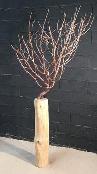 9 Meilleures Images Du Tableau Arbre Mort Decoratif Drift Wood