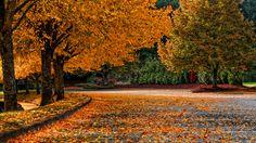 Autumn. Oregon. by Paul LaChance on 500px