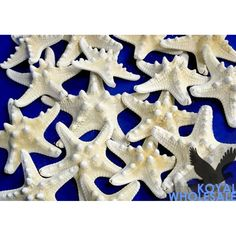 """Armored Starfish 3"""" - 4"""" (Bulk Case Pack 24) - WHITE [72481 U WHITE Armored Starfish] : Wholesale Wedding Supplies, Discount Wedding Favors, Party Favors, and Bulk Event Supplies"""