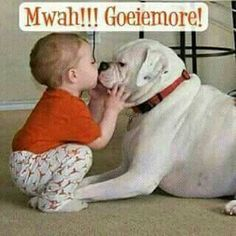 Gifts for your dog Puppies Tips, Boxer Puppies, Goeie More, Have A Happy Day, Beautiful Prayers, Boxer Love, Good Morning Wishes, Dog Days, Your Dog