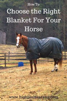 Three points to consider when choosing a new horse blanket and which styles work best for different body types. Riding Hats, Horse Riding, Horse Barns, My Horse, Dressage, Miniature Donkey, Horse Care Tips, Types Of Horses, Pet Dogs