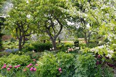 Reet Palusalun puutarha Viron maaseudulla on toukokuun lopulla kuin suoraan satukirjan sivuilta. Kurkkaa ideat ja loihdi unelmiesi puutarha!