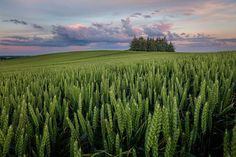 Where The Fields Are Green 2 by Martin Worsøe Jensen on 500px