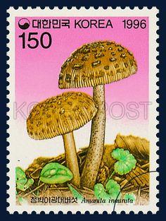 MUSHROOM SERIES(4th), Spotted a fly amanita, Mushroom, Dark Brown, Pink, Brown, Green, 1996 08 19, 버섯시리즈(네번째묶음), 1996년 8월 19일, 1874, 점박이광대버섯, Postage 우표