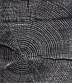 Timber end grain Photography Exhibition, World Photography, Wood Patterns, Textures Patterns, Otto Steinert, Online Katalog, Arts Integration, Organic Art, Tree Rings