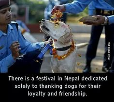 For love of the dogs !