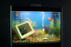 Those fish are Googlers also.  Thanks Kaspar