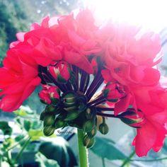 In gentle light of morning heart fades. You in a ring of strong male hands...  Mood for kiss... @hortus_ru   В нежном свете утра замирает сердце.. Ты в кольце сильных мужских рук..  Поцелуйное настроение ...   foto(c)ksanaduks #TheArtOfPlating#talnt…