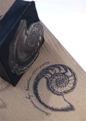 I love the spiral of a nautilus design. If I got a nautilus tattoo, I think THIS is the exact design I would want!