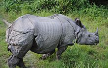 "Indian rhinoceros Rhinoceros unicornis ""It wears heavy armor"""