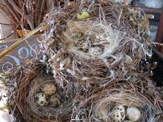 Nests and eggs...can't go wrong! At Sisters Garden and Bloom