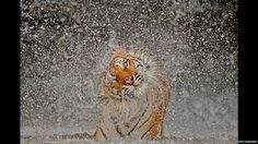 Ashley Vincent National Geographic Photo Contest - 1 (© Ashley Vincent/National Geographic)