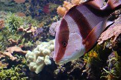 The Denver Aquarium