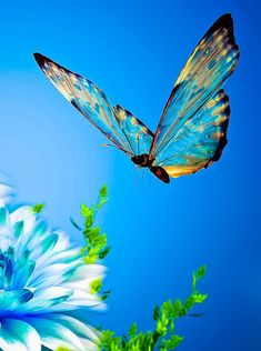 coiour-my-world: Butterfly-blue
