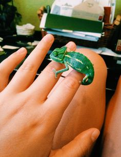 p i n t e r e s t : ✰ casey elizabeth ✰ Amazing Animals, Super Cute Animals, Cute Little Animals, Animals Beautiful, Green Animals, Animals And Pets, Funny Animals, Cute Reptiles, Reptiles And Amphibians