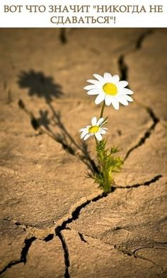 The daisy grew into a beautiful flower and the dry crack in the earth🌾 Desert Flowers, Love Flowers, Wild Flowers, Beautiful Flowers, Ranunculus Flowers, Fresh Flowers, Nature Pictures, Beautiful Pictures, Bloom Where Youre Planted