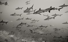 How to conquer a fear of sharks: swim with them - Telegraph