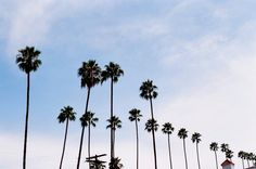 California Dreamin' in Los Angeles, Les Others