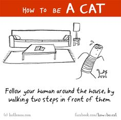 HOW TO BE A CAT: Follow your human around the house, by walking two steps in front of them.  by Last Lemon