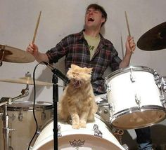 Men with cats. Drummer man with kitty singer.