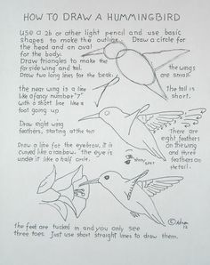 Worksheet from how to draw a humming bird.