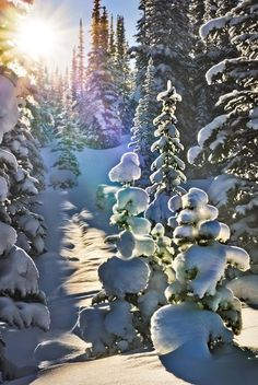 Canada snow! Wow! Just wow!!
