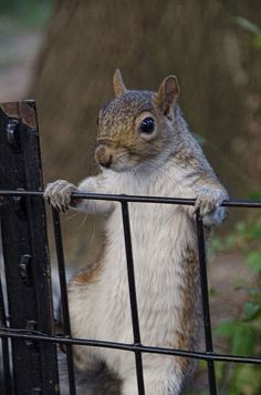 Holiday Christmas SQUIRREL CARD Squirrel Nature Animals And - Student befriends campus squirrels then dresses them in the cutest outfits ever