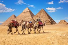 Holidays In Egypt, Memphis City, Step Pyramid, Short Vacation, Sharm El Sheikh, Egypt Travel, Luxor Egypt, Giza, Day Tours