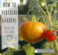 Whether you live in the tiniest studio apartment or the largest homestead or somewhere in between, going vertical with your gardening can help you make the most of the space that you have!  // Mom with a PREP   #gardening #verticalgardening #squarefootgardening