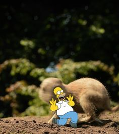 Homer and a gopher