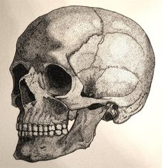 Human skull created using stippling method with pen and ink. Pen and ink human skull Dotted Drawings, Pencil Art Drawings, Drawing Sketches, Human Skull Anatomy, Mother Painting, Stippling Art, Skull Artwork, Tinta China, Learn Art