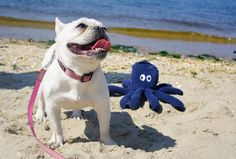 """""""Mom...is that a real Octupus?""""... """"cause it's not very scary"""", Princess Layla…"""