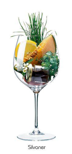 SILVANER:  Honigmelone, Zitrone (Schale), Blüte, Gras, Kräuter, Honig