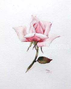 Rose Watercolor🎨 Moylin du Roy, 300gm, fin Сегодня как-то так! Очень хочу спать, лень работать. Но скоро будет новая роза! Watercolor Plants, Watercolor Rose, Rose Illustration, Botanical Illustration, Rose Pic, Watercolor Techniques, Vintage Roses, Botanical Art, Gouache