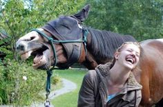 The 'This Is What You Look Like,' Horse Edition | The 30 Greatest Animal Photobombs Of 2013