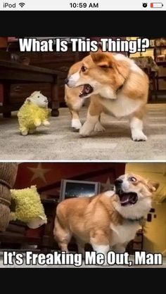 This would be my dog