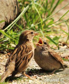 www.pinterest.com/JennyRainforest/birds-are-beautiful/