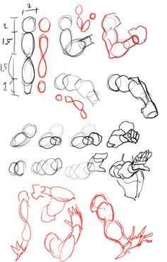 Character Anatomy  Arms on Pinterest  Character Design Animation ...
