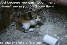 Feral cats need love too I Love Cats, Crazy Cats, Cute Cats, Animals And Pets, Funny Animals, Cute Animals, Beautiful Cats, Animals Beautiful, Beautiful Creatures